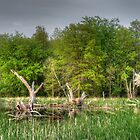 Dead Wood Swamp Before Storm by marshmaven