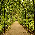 Garden Archway by Martina Fagan