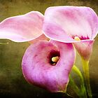 Trio of calla lilies by Jenny1611