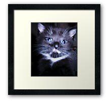 MrsMew Framed Print