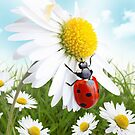 Ladybird on daisy flower by Pics4merch