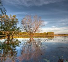 McMinns Lagoon by Jodie Williams
