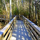 Boardwalk at Blackwater by Debbie Robbins