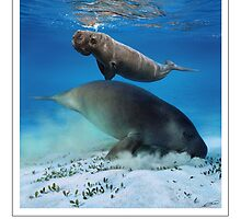 DUGONG (Dungong dugon) DIGITAL PAINTING. NOT A PHOTOGRAPH by owen bell