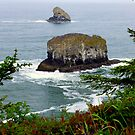 Cape Meares Sea Stacks ~ Oregon   by Elaine Bawden