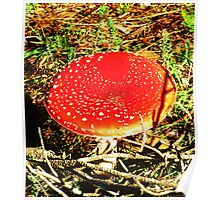 Red Toadstool Poster