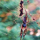 Orb Spider by margaret walsh
