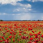 Poppies in Bloom by Darren Peet