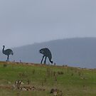 Emus on the Hill by DEB CAMERON