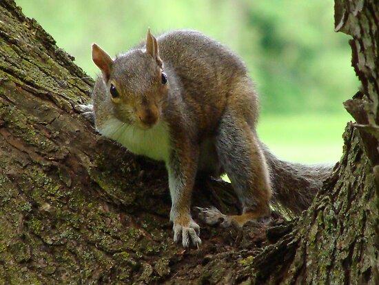 I'm Feelin' a bit Squirrely by vigor