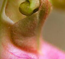 Moccasin Flower detail. by Daniel Cadieux