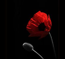 Poppy and Pod by robevans