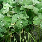 Dewy clover by theonewhoisfree