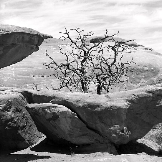 Eons - Arches National Park by Harry Snowden