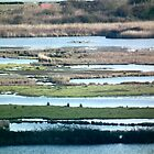 wetland stripes by theonewhoisfree