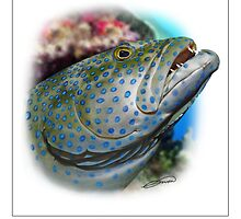 PEACOCK GROUPER Cephalopholis argus ( NOT A PHOTOGRAPH OR PHOTOMANIP) by DilettantO