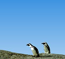 Pair of African Penguins, Boulder Beach, South Africa by Carole-Anne