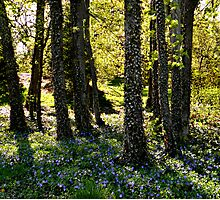 Forest of Wonder Photographic Print