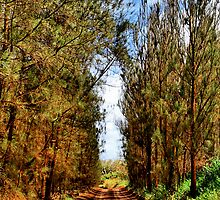 Red Pines - Lanai by djphoto
