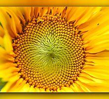 Sunflower by RosiLorz