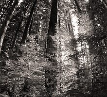 Canopy - Mount Rainer National Park by Harry Snowden