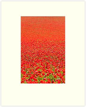 Blackstone Poppies V by Chris Tarling
