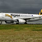 Tiger Airways - VH-VNF by Cecily McCarthy