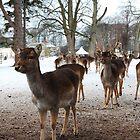 Deer Galour by Simon  McCue