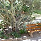 Desert shaded bench by nealbarnett