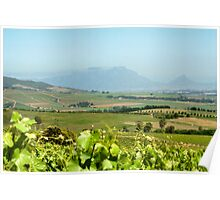 Table Mountain from Stellenbosch, South Africa  Poster