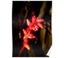 New Bromeliad Buds Poster