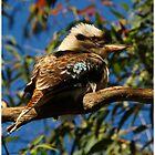 The Early Bird - Laughing Kookaburra by Stuart Cox