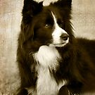 Soccer Dog 2 - border collie by Jenny Dean