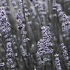 Lavender - and something by Ulla Jensen