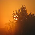 Summer haze by Marina Herceg