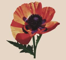 Oriental Poppy by Susan Savad