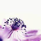 Anemone on white by M a r t a P h o t o g r a p h y