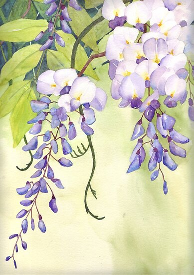 Wisteria by Val Spayne