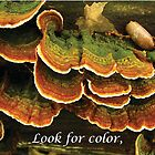 Look for Color in Unexpected Places by Deb Fedeler