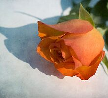 Red Rose  by Jenny1611