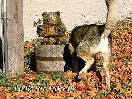 Look for Humor to Brighten Your Day by Deb Fedeler