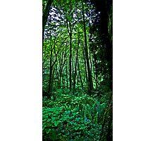 terrarium green Photographic Print