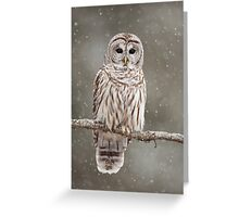 Barred Owl in heavy snowfall Greeting Card