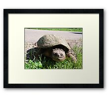 Huge Snapping Turtle Laying Eggs Framed Print