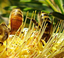 macro world of bees  by gaylene
