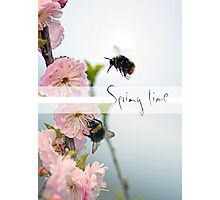 Bubble bees and cherry blossoms Photographic Print