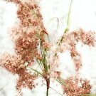 The Wild Grasses by LouiseK