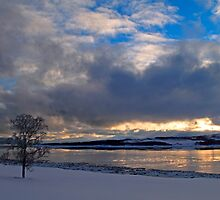 Winter tree-III by Frank Olsen