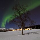 Winter tree-V by Frank Olsen