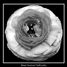 Flower in Black & White by Rose Santuci-Sofranko